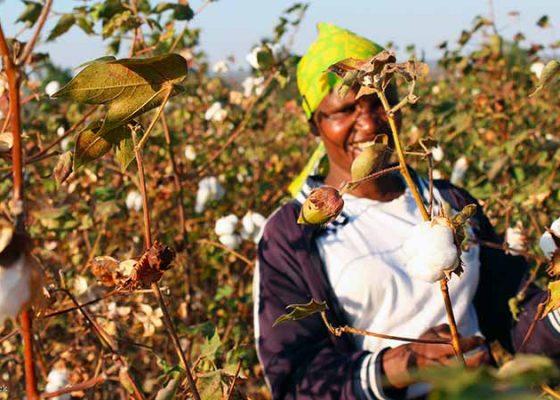 Dirigée par Prama Bhardwaj, la société britannique Mantis World soutient les fermes en conversion pour faire face à la crise du coton biologique.